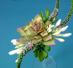 Veronica Succulents in Sugar